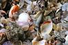 Bagamoyo Seashells