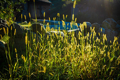 Grasses at the end of summer