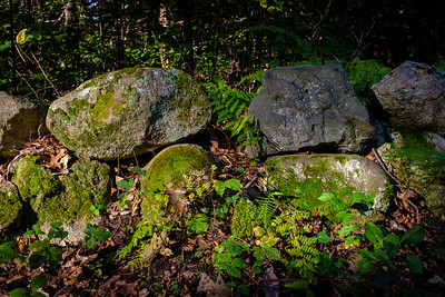 Stones, Ferns and Moss
