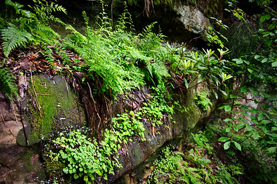 Fern Ledge