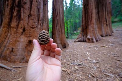 Merced Grove of Giant Sequoia