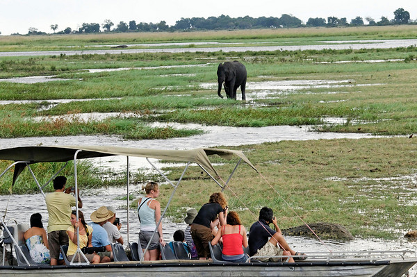 Elephants and tourists, Chobe river cruise, Botswana