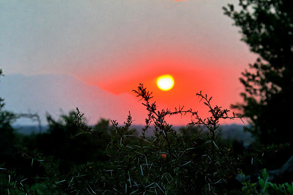 Thornybush sunset