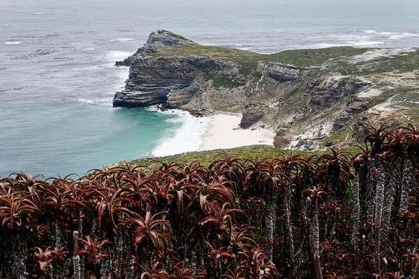 coastal fynbos (fine bush), Cape Point, S. Africa