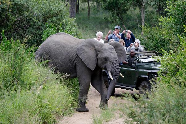 great photos, elephants, Thornybush, S. Africa