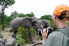 Cindy and elephants, Thornybush, S. Africa