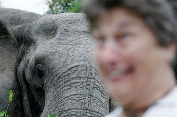 Suzanne and elephant, Thornybush, S. Africa