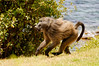 running with fruit, lunch at the Black Marlin, S. Africa