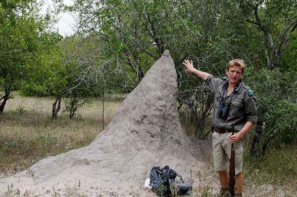 1,000 yr old termite mound,walking safari, Thornybush, S. Africa
