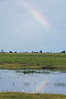 rainbow and egret, Chobe National Park, Botswana