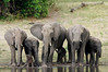 family of elephants, Chobe river cruise, Botswana