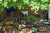 Lamb and veggies in the shade, road to Khajuraho