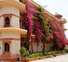 Wonderful bougainvillas at a rest stop, on the road to Kalakho