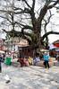 Suzanne, tree crushing temple, Hanuman-dhoka Durbar Square, Kathmandu Nepal
