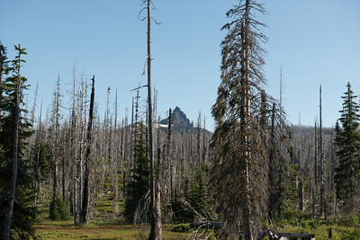 Three Fingered Jack through the burned trees.