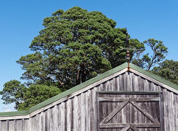 Barn and Pohutukawa tree
