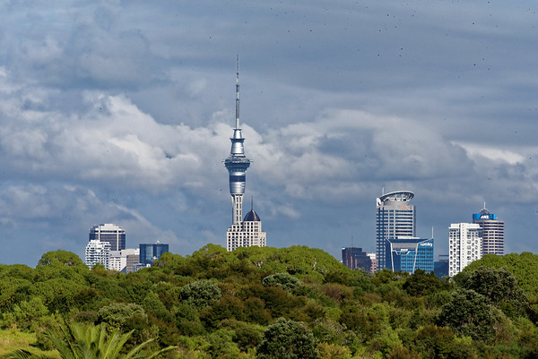 Downtown Auckland from MJ Savage Park