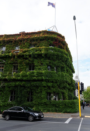 Really ivy covered
