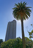 Palm and building, Auckland