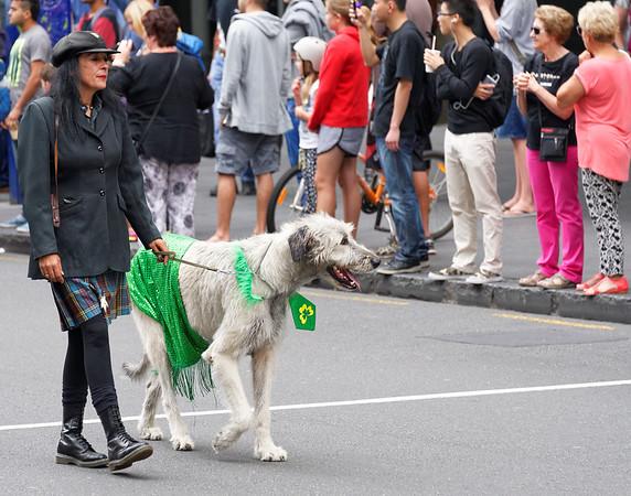 Irish Wolfhound and handler