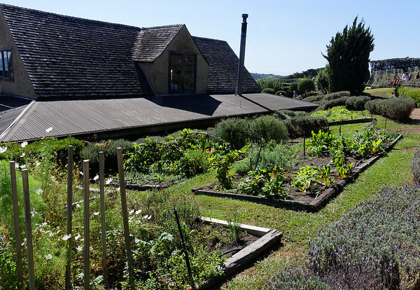 Growing their own vegetables behind the restaurant