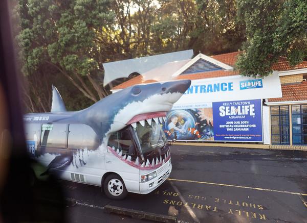 Shark bus