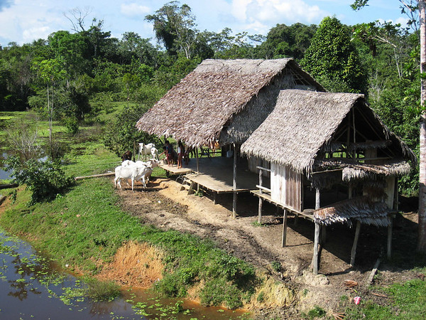 Ribereño dwelling, Yarina, Rio Tapiche, Peru