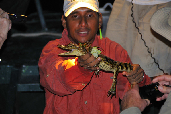 #2 (mouth open) Spectacled Caiman (Caiman crocodilus), Yana Yaku (Black Water) Lake, Rio Pacaya, Peru
