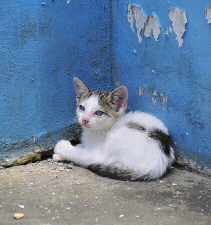 Kitten at the Ranger Station, Rio Pacaya, Peru