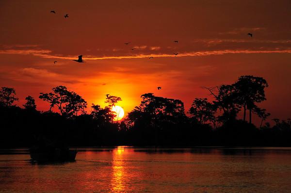 Sunset and Cormorants, Yana Yaku (Black Water) Lake, Rio Pacaya, Peru