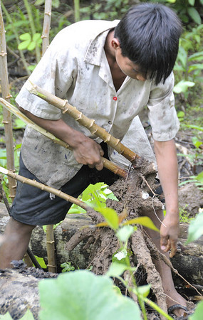 Ribereño family, son Christian showing how manioc is havested & planted, Rio Tapiche, The Amazon, Peru