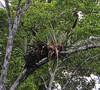 Bromeliads, Yanallpa, Rio Ucayalli, Peru