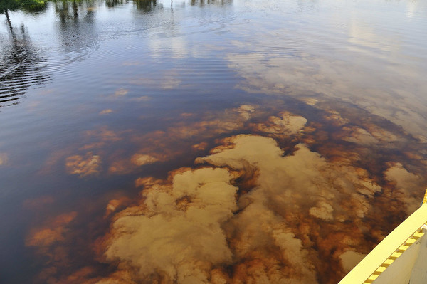"""Mixing of the nutrient-poor black water river with the nutrient-rich brown water river.  These black water rivers have been compared to """"slightly contaminated distilled water,""""  Rio Pacaya, Peru"""