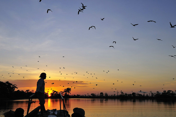 Cormorants flying at sunset, Yana Yaku (Black Water) Lake, Rio Pacaya, Peru