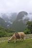 Llama and view, Machu Picchu, Peru