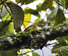 bird with insect, Inkaterra Hotel, Aguas Calientes, Peru
