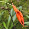 Ladyslipper orchid,12-acre nature trail, Inkaterra Hotel, Aguas Calientes, Peru