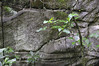 Possible natural inspiration for Incan stonework,12-acre nature trail, Inkaterra Hotel, Aguas Calientes, Peru