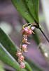 orchid,12-acre nature trail, Inkaterra Hotel, Aguas Calientes, Peru