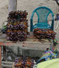 Crabs bundled for sale