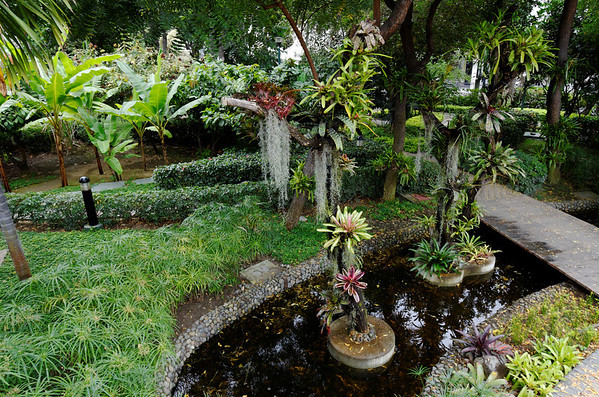 Bromiliads, papyrus and waterway