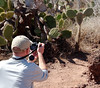 "The much-photographed ""Miguel Raton"" cactus, Isla Rábida Galápagos"