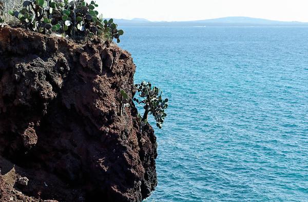 Cactus and lava rock, Isla Rábida Galápagos