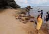Galápagos sea lions (Zalophus wollebaeki) in their natural repose, Isla Bartolomé
