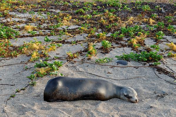 Isla Santiago, Asleep on the beach