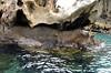 Sally Lightfoot crabs, Isla Bartolomé