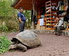 Our bus driver and a giant tortoise