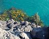 Isla Santiago, Giant Tortoise feeding