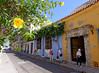 Cartagena  Columbia - Allamanda in old town