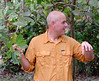Ivan explaining the cashew nut growing separately from the fruit and the problem with cyanide